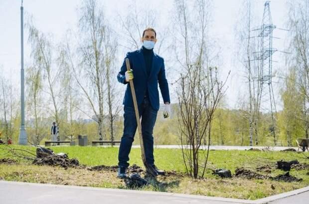 На северо-западе Москвы посадили сирень в память о героях ВОВ