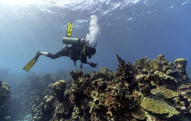 Кажется, гидроархеологи не успокоятся, пока эти клады не найдут. /Фото: vestiprim.ru