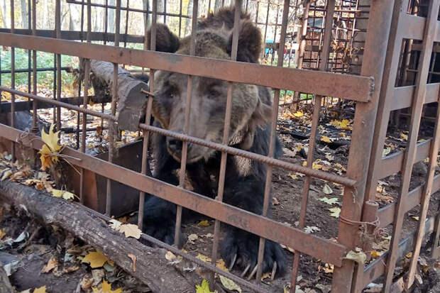 Найденного в клетке истощённого медведя приютили фермеры из Башкирии