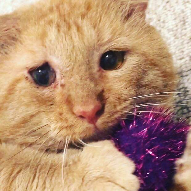 Женщина подружилась с котом, прожившим годы на улицах, и вернулась за ним, несмотря на все препятствия