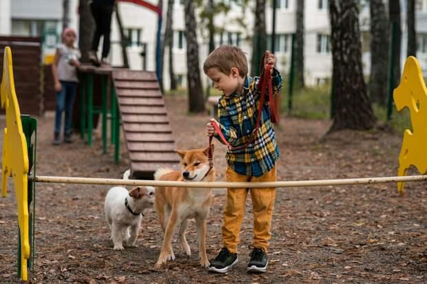 Две площадки для выгула собак появятся в Ижевске до конца года