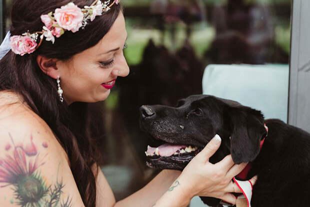 Свадебный подарок от онко-больного пса из приюта: да любите друг друга!