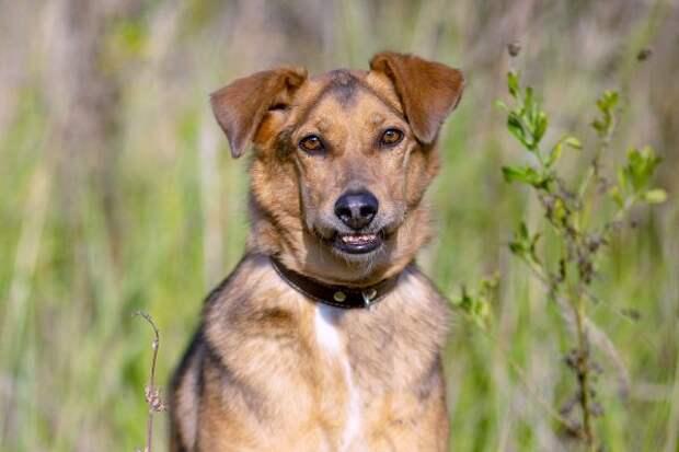 Жителям САО предлагают взять питомцев из приюта для собак