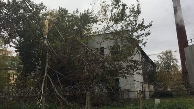 Костромского подростка «убило» упавшим из-за непогоды деревом