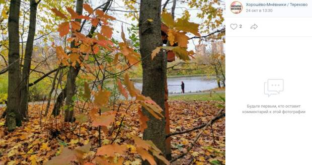 Фото дня: яркая осень в Серебряном бору