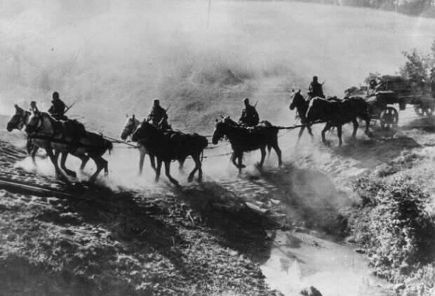 Лошадей использовали в основном в артиллерийских частях и для перевозки техники и припасов.
