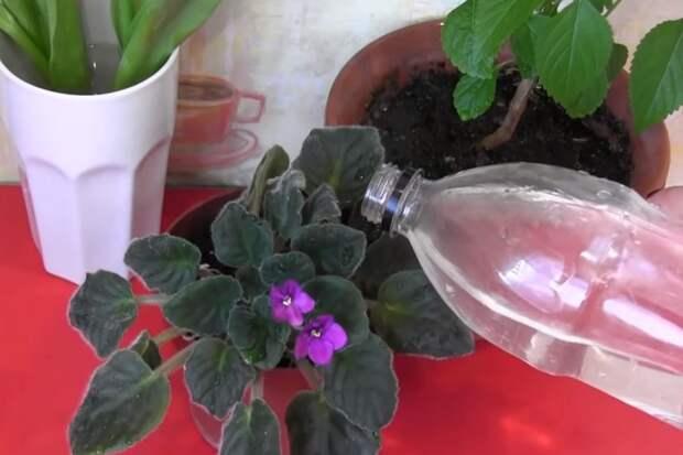 Средство, которое заставит пышно зацвести даже самый разбалованный цветок
