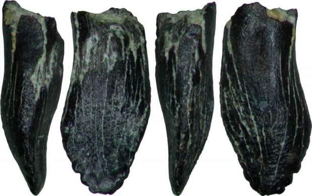 В Якутии обнаружили самые северные следы зауроподов