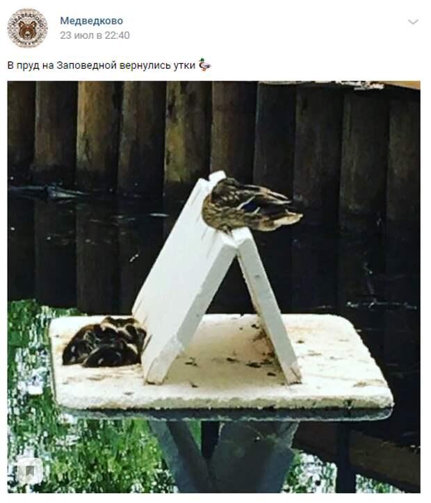 Утки вернулись в пруд на Заповедной