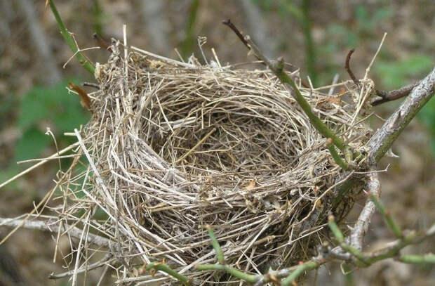 Птица - мать отважно спасает своих птенцов (Видео)