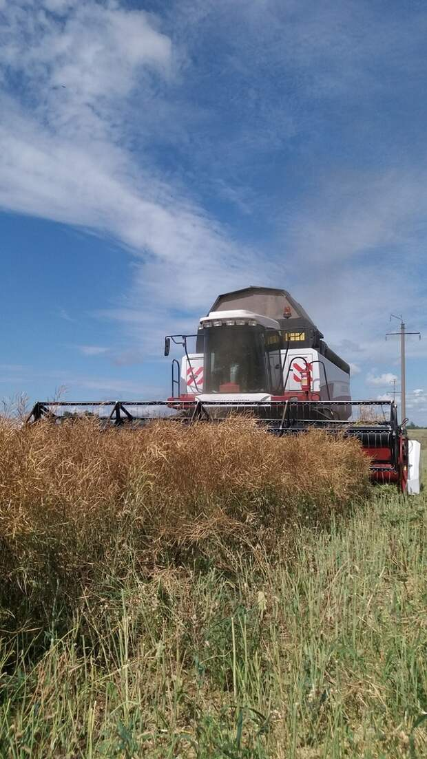 В Удмуртии на 2 недели раньше начали собирать урожай зерновых и зернобобовых культур