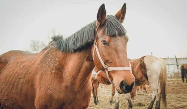 В Новоорске полиция проверяет обстоятельства падения подростка с лошади