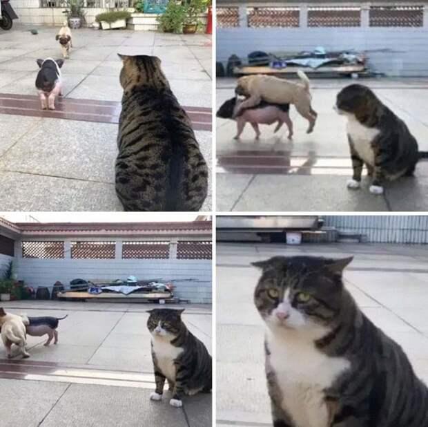 Найден эмоциональный кот, достойный звания короля драмы