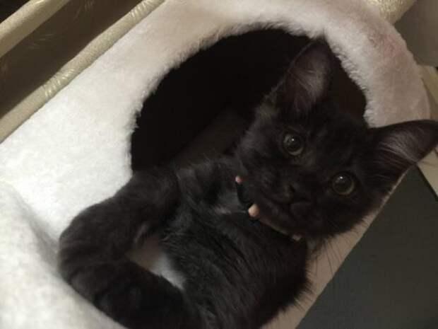 Спасенный с грязной обочины котенок вырос в красивого кота с серебристой гривой