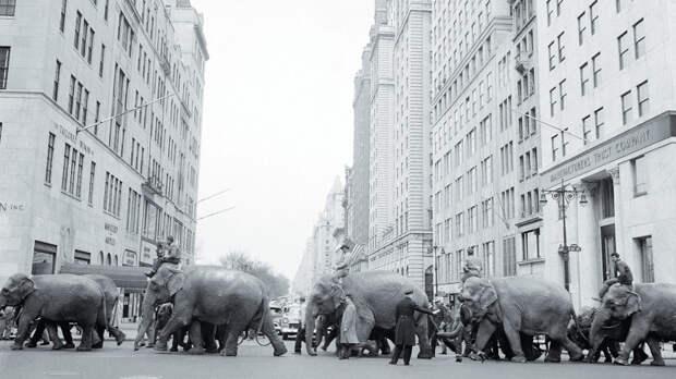 Вот и опускается занавес старейшего цирка США - The Ringling Bros. and Barnum & Bailey закрытие, сша, цирк