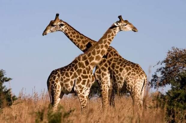 Топ 15: Самые крупные в мире животные