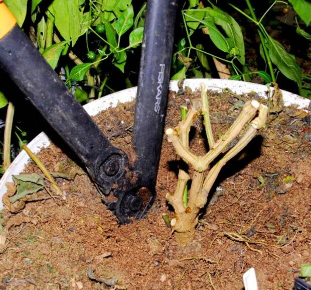 режем корни