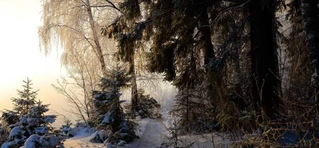 «Зима течет в волосах Василисы». Французские парфюмеры воспели русский Север