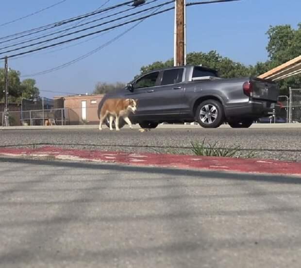 Бездомная и раненая собака была в страхе, а потому не подпускала к себе людей после пережитого