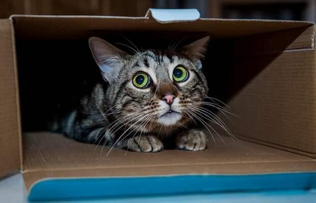 Почему коты сложно поддаются дрессировке и не спешат делать, что им говорят