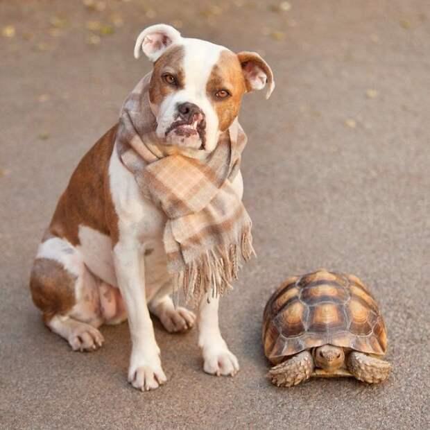 Такие разные, но такие близкие: удивительная дружба собаки и черепахи