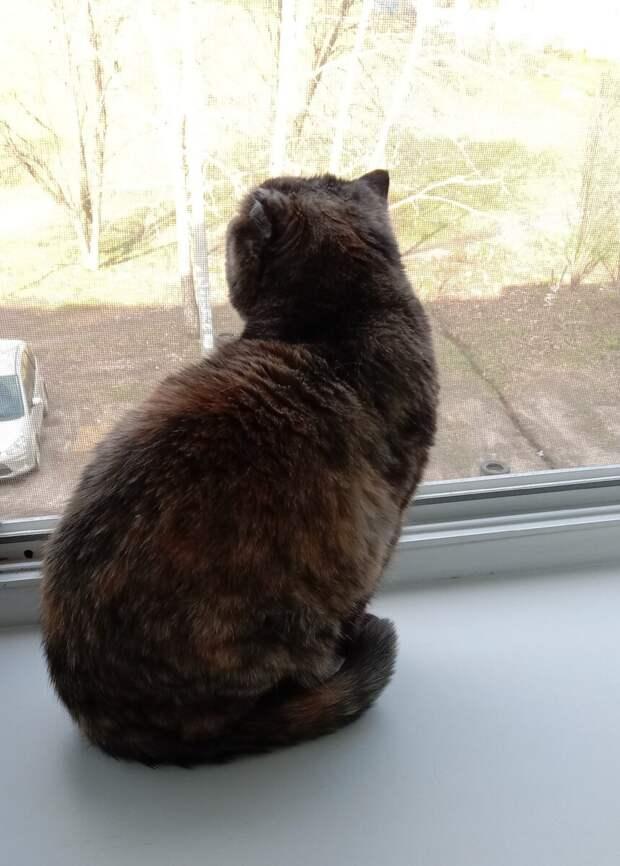 Увидела, как выгуливали кошку, привязавав ее к балкону. И что-то мне не понравилось это