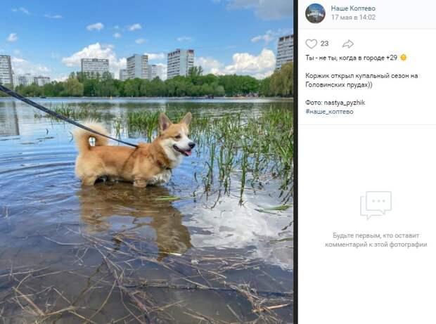 Фото дня: животные спасаются от жары в воде Головинских прудов
