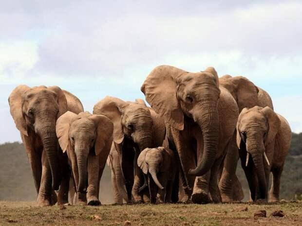 """10 самых дорогих животных, за которыми """"гоняются"""" миллионеры"""