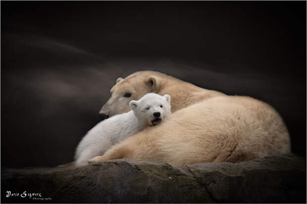 motherhood by Doris Schwarz on 500px.com