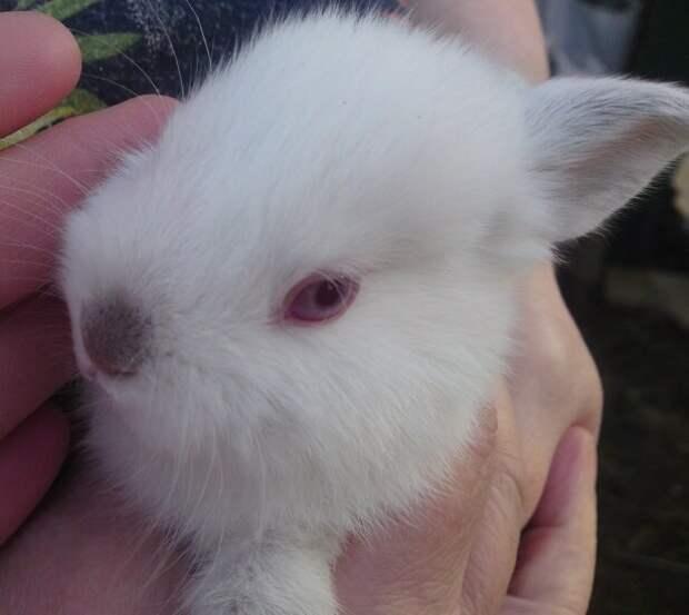 8 крольчат в одной коробке