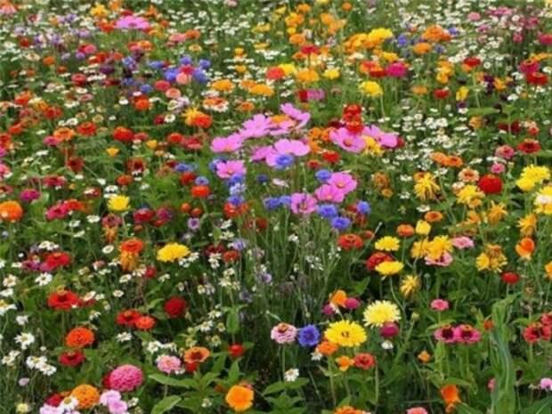 Как полевые растения защищают от зла и привлекают удачу...