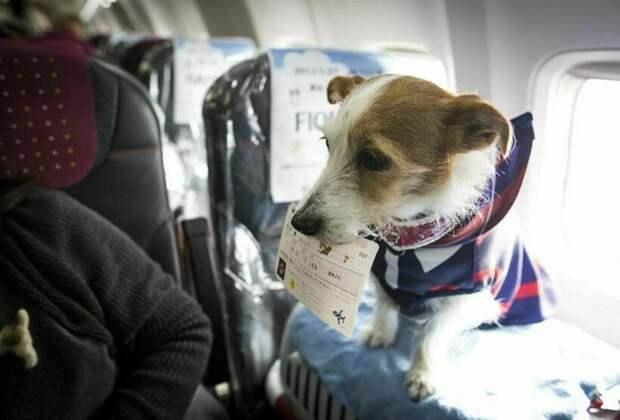 Путешествие с животными: какой транспорт выбрать