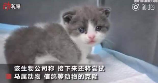 Котёнок Чеснок чувствует себя хорошо. /Фото: кадр из телерепортажа