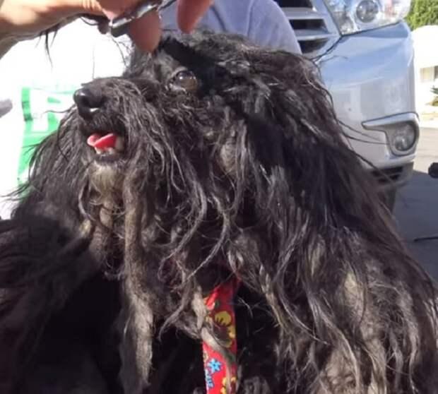 Спутанную шерсть обрезали на собаке прямо во время спасения: она мешала питомице взглянуть на людей