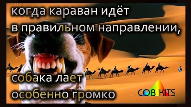 Собаки лают, а караван идёт