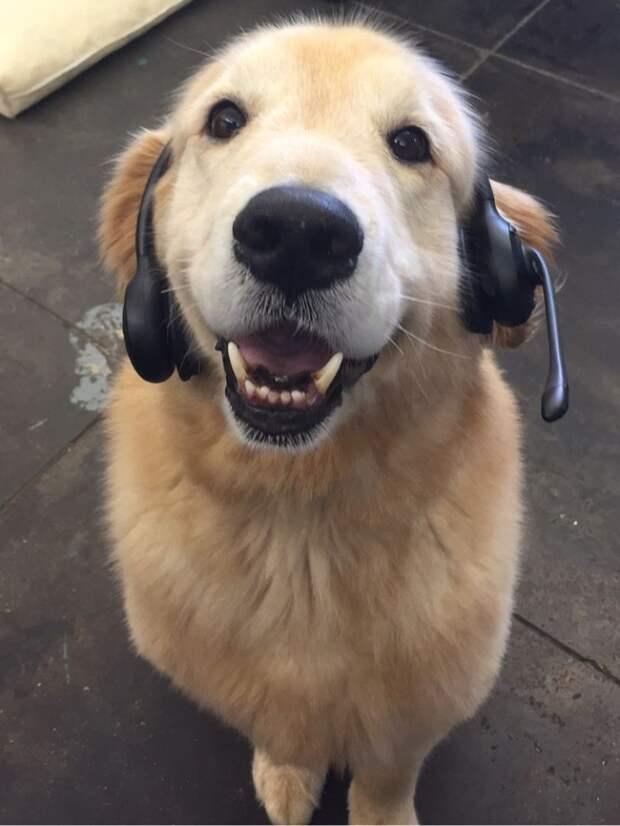 Веселые и игривые собаки (10 фото)