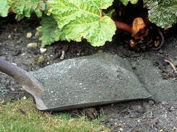 Польза золы в защите растений