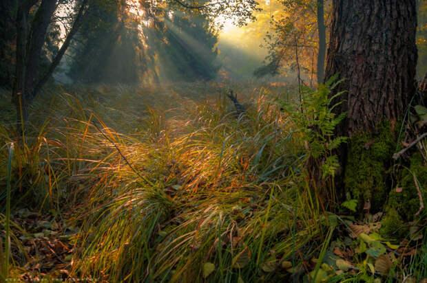 Little green fern. by Adam Wajner on 500px.com