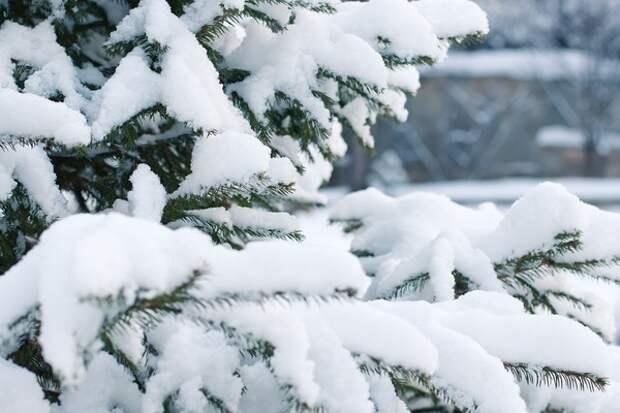 Синоптики дали прогноз на новогоднюю ночь