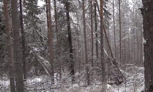 Как купить лес в Финляндии