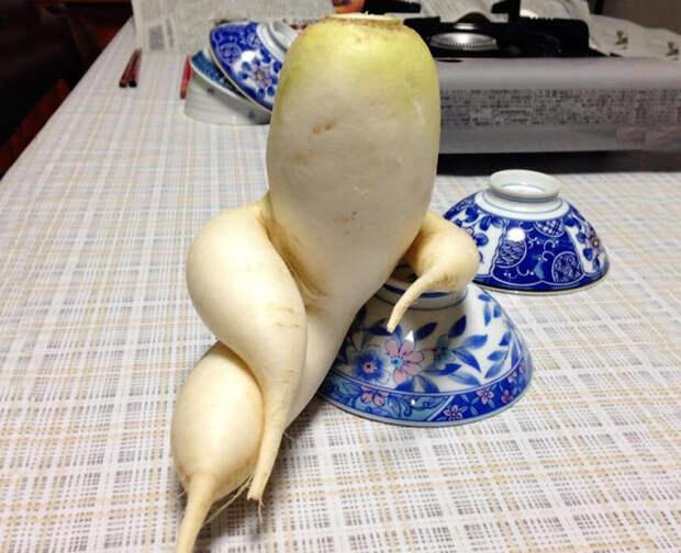 Вальяжная редька и другие фрукты-овощи, забывшие, что они растения