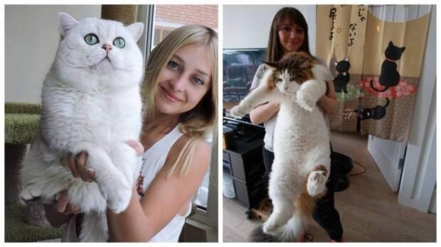 Хорошего должно быть много: 14 больших котов с такой же большой харизмой