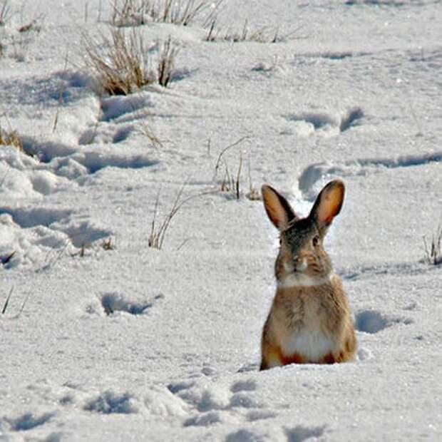 9. Чтобы сфотографировать зайца в штате Вайоминг в период с января по апрель, необходимо получить специальное разрешение. абсурдные законы, законы сша, сша
