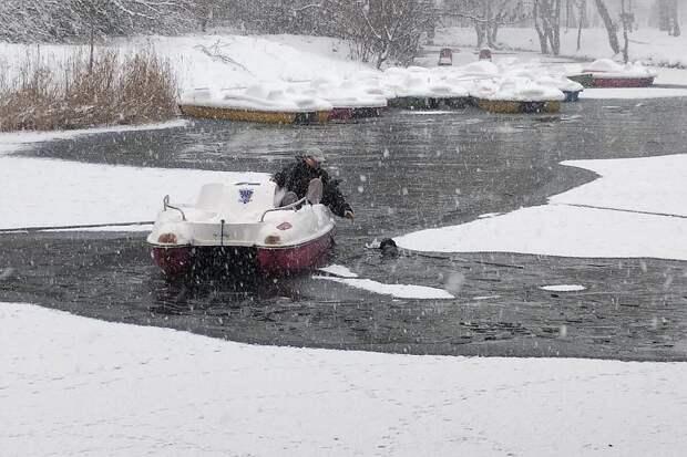 Дворняга провалилась под лед. Фото: Леонид Карпов
