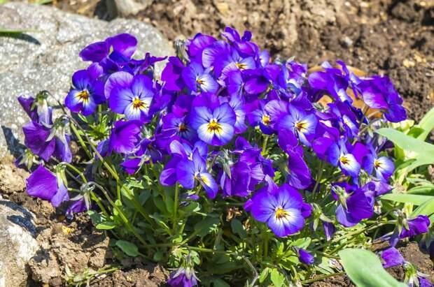 Около дома на Башиловской коммунальщики высадили цветы