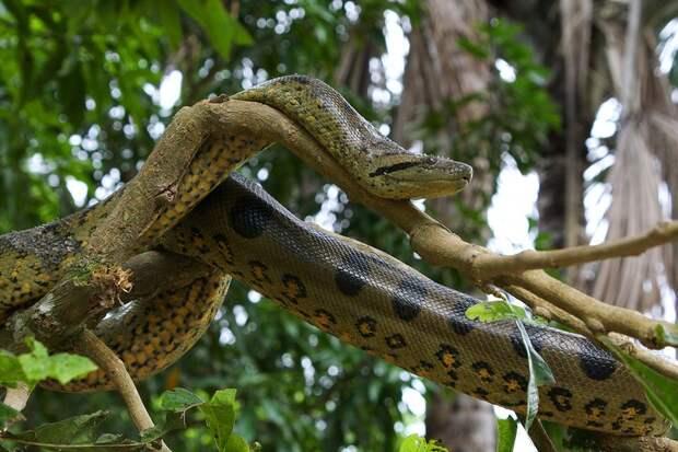 Amazonas21 Большое фотопутешествие по лесам Амазонки