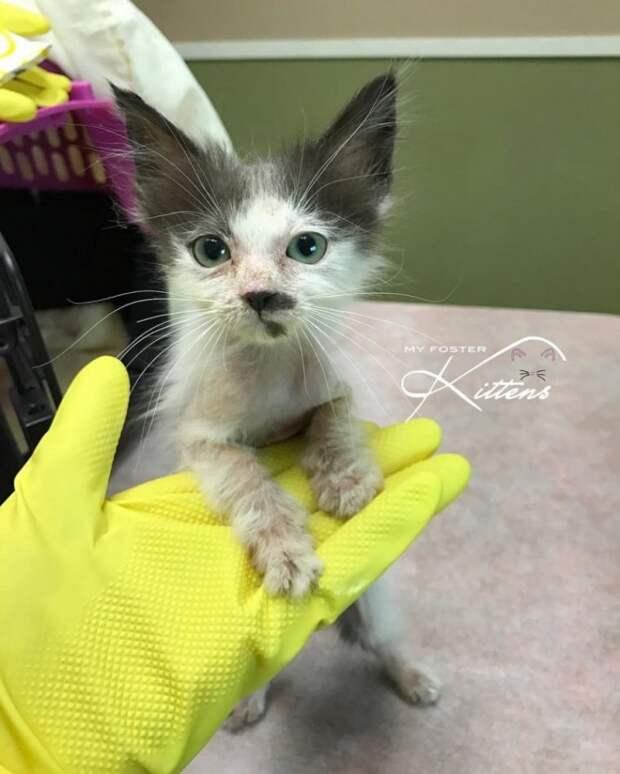 Женщина спасла лысого котенка, которого хотели усыпить