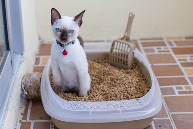 Кот должен комфортно себя чувствовать во время процедур / Фото: miltor.ru