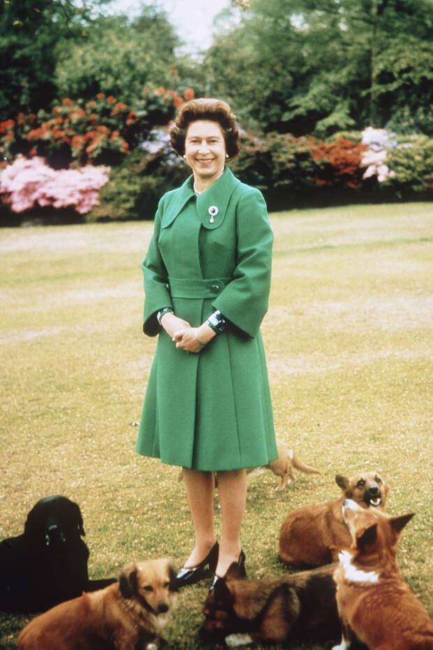 Елизавета II с собаками