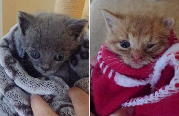 Кошка бросила котят на пороге – малышам помогли как раз вовремя